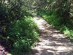 Saliendo de las cabañas, a la derecha, camino a la reserva ecològica del huitepec.