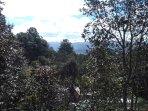Vista de san Cristòbal desde la reserva del Huitepec.  Legas en unos 20 minutos caminando.