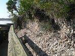 Spanish_Mount_(Edisto_Beach_SP)_from_boardwalk.
