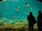 Grande Villas Seaworld Orlando