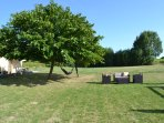 The mulberry tree and relaxing seating area