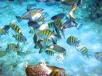 Explore our undersea world