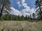 Community Borders Pristine Tahoe Meadow (Conservation area)
