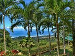 Meticulosity maintained landscaping, beautiful palms, plants, flowers, and plenty of ocean views!