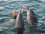Swim, snorkel and dive with dolphins, or trainer for a day at nearby Anthony's Key Resort.