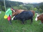Rinder-Fütterung auf unserem Hof Müller auf dem Kupferberg