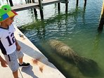 Watch for Manatee off our seawall and dock