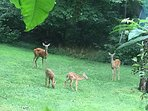 This family visits our backyard daily, just a few feet from the pool.