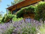 Garden / House