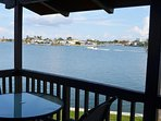 watch dolphins from the comfort of your private balcony
