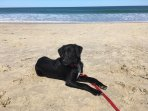 Bentley on the beach