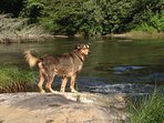 Pet friendly vacation where your pup can enjoy the river.