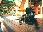 Olie is happy to provide you company if you are missing your pet while in Girdwood