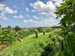 View from the garden of the Villa into the rice fields