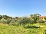 Peace & quiet amongst the olives