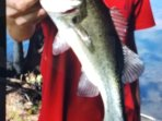 Know by the locals for its awesome fishing ,our 30 acre lake is well stocked for our guests to fish