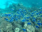 Snorkeling in the house reef