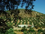 Your holiday home nestling amongst the beautiful olive groves, privacy guaranteed but not remote