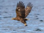 White tailed Eagle see by our guests