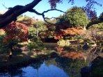 Kyu-Furukawa Garden, 10 mins walk from this apt.