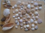 Our seashell collection 2017