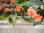 Garden flowers.  Year around garden interests