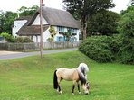 New Forest ponies wander through the villages.