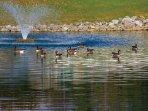 Wyndham Patriots' Place lake