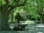 Les fontaines à l'ombre des platanes centenaires