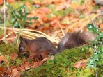 A red squirrel in the grounds of Mingarry Lodges