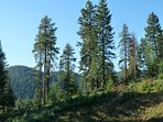 Maxwell Falls Mountain
