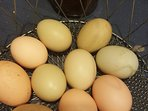 Enjoy fresh farm eggs during your stay.. you will never eat store bought again!