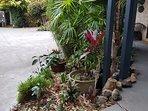 Studio front garden.