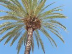 Parrots nesting in the palms