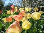 Springtime in the garden.