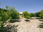 Fruit trees in the garden - Villa Russelia in Rhodes