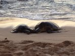 Turtles resting on our secret beach!