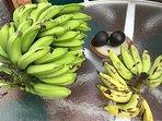 Fresh bananas, limes, and basil on property!