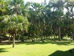 Le jardin tropical vue de la terrasse Abondance et luxuriance