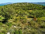 Take a nature walk from our house through the olive orchards.