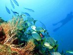 Cano Island Diving and Snorkeling, the best in Costa Rica and directly offshore