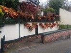 Neighbours beautiful flower display.