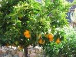 Fruitful Harvest from the Courtyard Garden