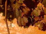 Autumn at Top Paddock