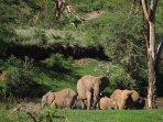 Elephant Family near Kiota Safari House. We often have elephants right below the house.