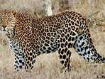 Our house overlooks the El Karama Wildlife Sanctuary, home of incredible wildlife including leopards