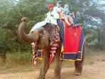 Royal Elephant Safari at my farmhouse