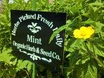 Mint Leaf Cottage - garden