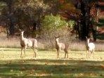 Wildlife around Blue Lake