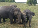 There's three national parks nearby and they are loaded with Elephants, deers, croc's, birds,etc..
